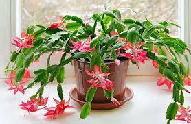 تحقیق تولید مثل در گیاهان گلدار