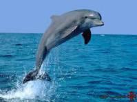 تحقیق دلفین